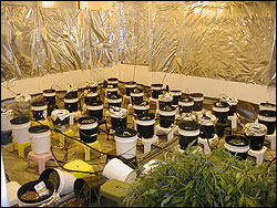 Grow Room Drying