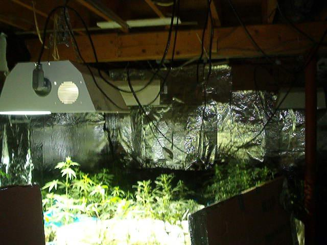 Indoor Marijuana Grow