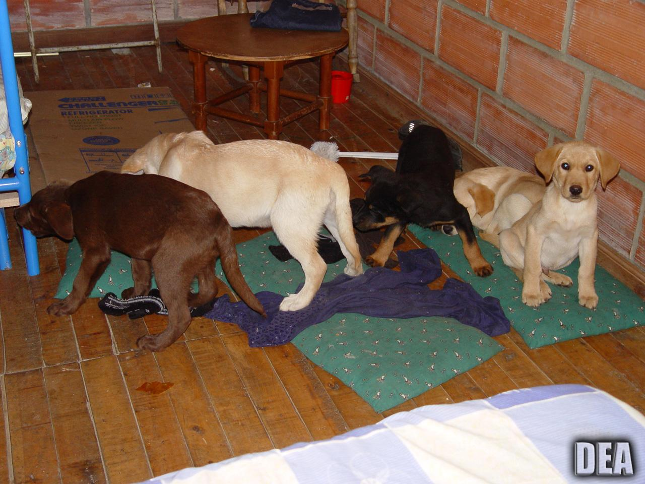 puppies found in Colombia